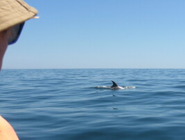 Dolphin watching, scuba-diving